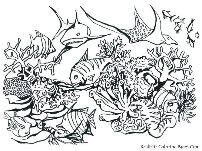 Realistic Animal Coloring Pages Medium Size Of Ocean Animals 667x500 Jpeg Ocean Coloring Pages Animal Coloring Pages Animal Coloring Books