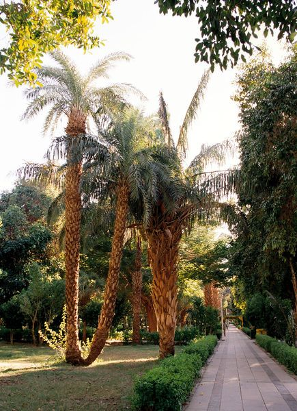 Tour en la isla de Kitchener http://www.maestroegypttours.com/sp/Excursi%C3%B3nes-en-Egipto/Asa%C3%BAn-Excursiones/Tour-al-Museo-Nubio-y-la-isla-de-Kitchener-en-As%C3%BAan
