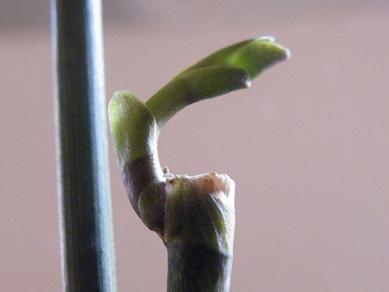 Les 25 meilleures id es de la cat gorie terrarium pour plantes grasses sur pinterest terrarium Comment entretenir orchidee