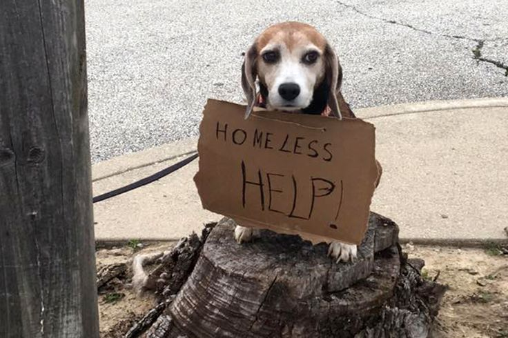 Shelter For Homeless Pets May Be Homeless Themselves If Developers Have Thier Way | Cuteness.com