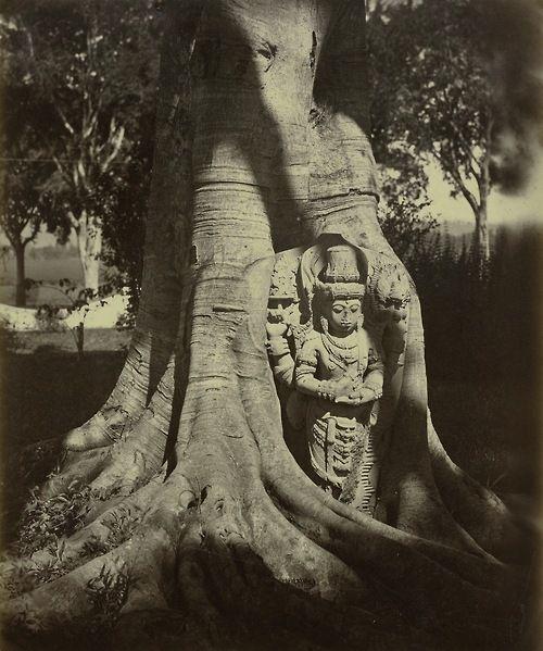 Isidore van Kinsbergen (1821-1905) Statue in a ficus, Kediri, East Java, 1866-1867