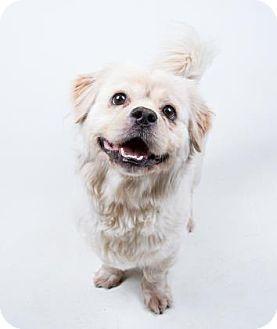 Decatur, GA - Pembroke Welsh Corgi Mix. Meet Landers, a dog for adoption. http://www.adoptapet.com/pet/17930566-decatur-georgia-pembroke-welsh-corgi-mix