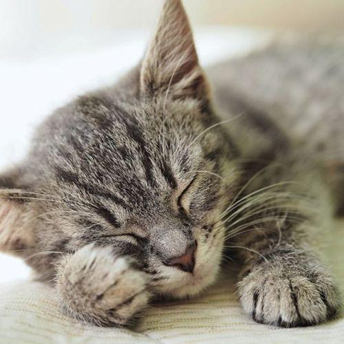 Nechce se Vám dnes stávat? Věřte že v tom nejste sami. Foto z galerie Můj Olympus. Autor: Peter Cyprian; fotoaparát: OM-D E-M10; objektiv: M.Zuiko 45 mm 1:1.8 #olympus #olympusomd #em10 #mzuiko #mzuiko45mm #mujolympus #animals #cat #kitty #dream via Olympus on Instagram - #photographer #photography #photo #instapic #instagram #photofreak #photolover #nikon #canon #leica #hasselblad #polaroid #shutterbug #camera #dslr #visualarts #inspiration #artistic #creative #creativity