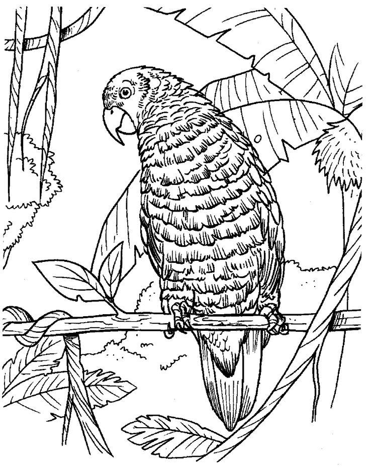 Kolorowanka papuga