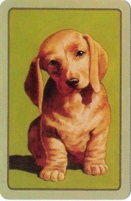 Coles Swap Card Dachsund Puppy | eBay