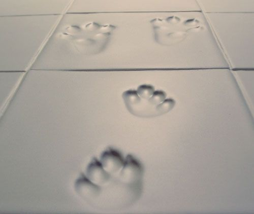paw print tile. Would be adorable for my dog's bathroom