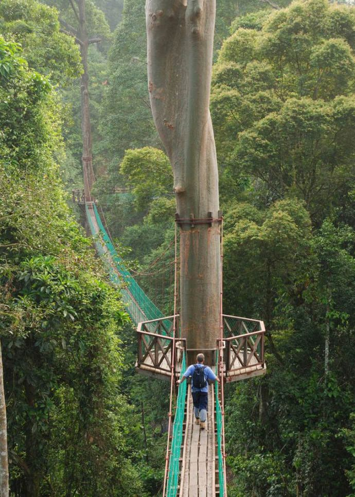 Hike the Borneo Rainforest Canopy Walkway