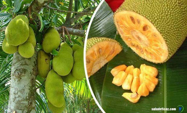 En este artículo te contaremos acerca de la fruta yaca para que sirve, cuales son sus potentes propiedades. ¡Comparte esta información!
