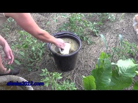 Как удобрять помидоры, подкормка томатов - YouTube