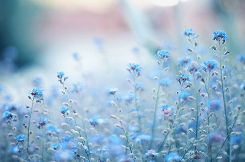 I love forget me nots