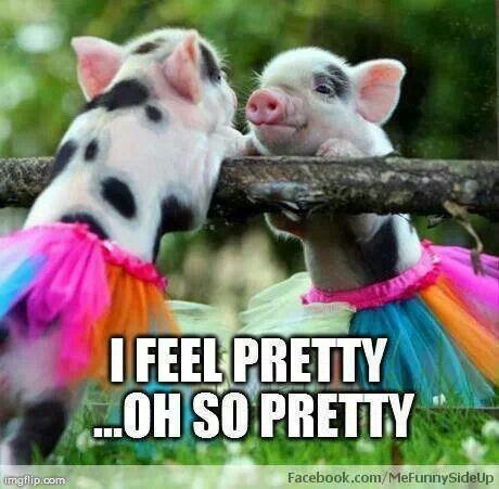 Aww so cute made me think of @Ashley Walters Stevenson @Dwenette Stevenson Stevenson  #micropig #minipig