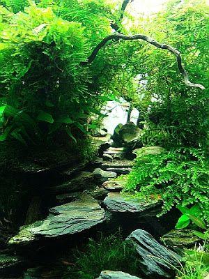 Verwalten Sie Ihre Süßwasser-Aquarium, tropische Fische und Pflanzen: Acuavida…