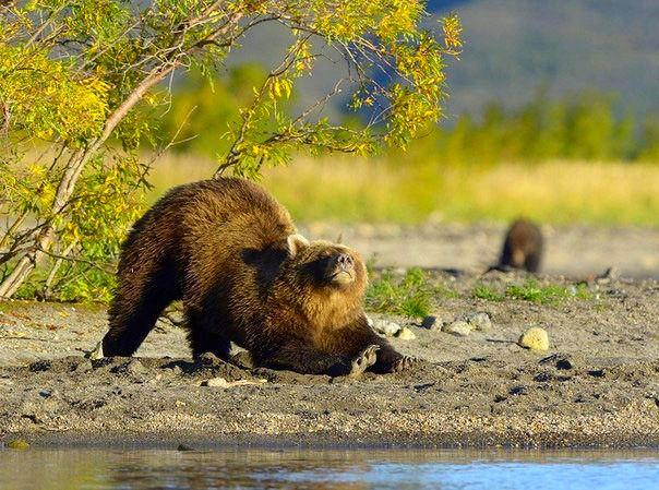 Foto: Косточки разомну...и на рыбалку...с Машкой. Благодать!