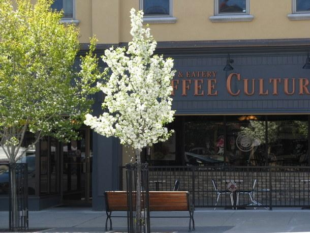 The Town of Tillsonburg (ON) Coffee Culture, great place to relax!