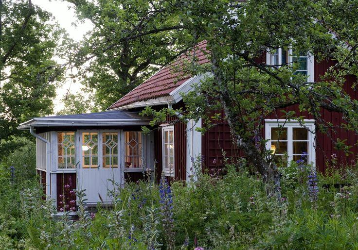 Glas veranda, vildvuxen trädgård