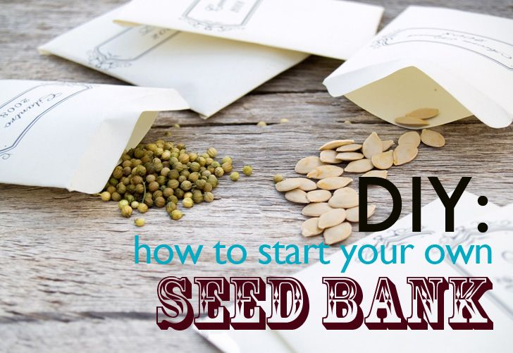 DIY: How to start a community seed bank | Inhabitat - Sustainable Design Innovation, Eco Architecture, Green Building