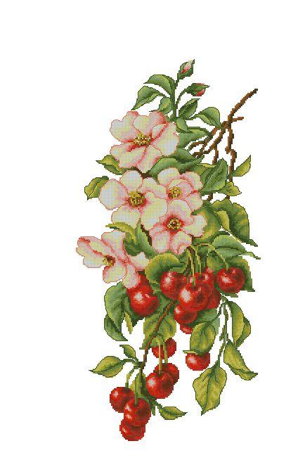 cherry tree  (bbj0032)1/6