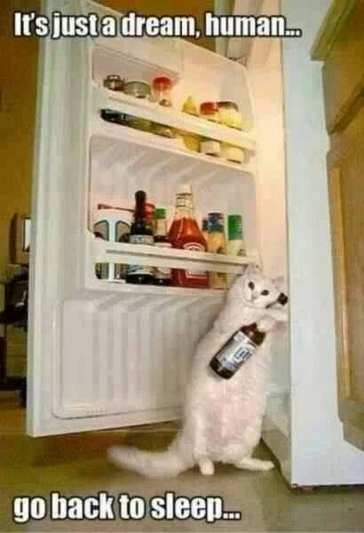 It must be a dream……because cats don't drink beer!