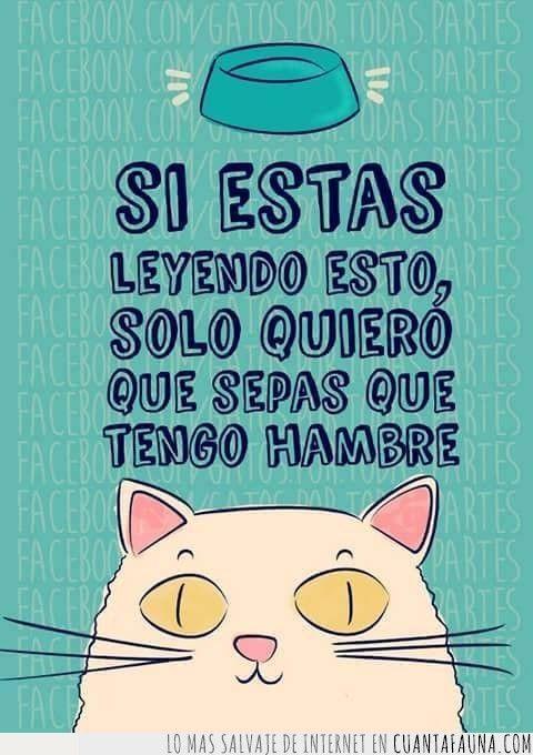 34014 - Las frases de Mr. Cat                                                                                                                                                                                 Más