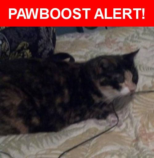Please spread the word! Moma Cat was last seen in Lithia, FL 33547.    Nearest Address: Near Osprey Park Pl & Osprey Ridge Dr