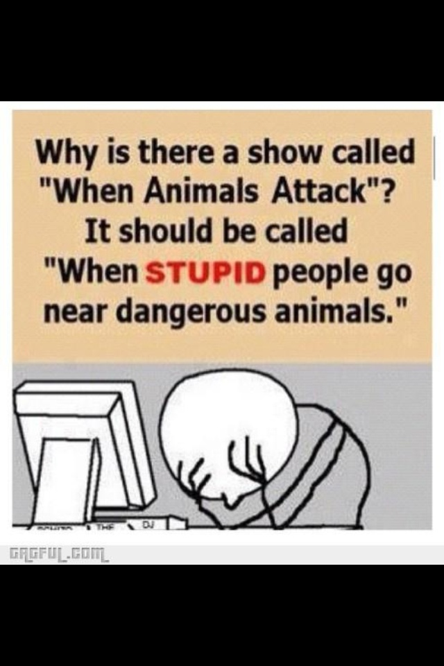 Why The Stupid Names For Show Dogs