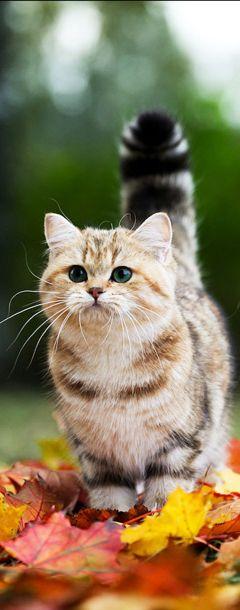 Un gatito explorador.