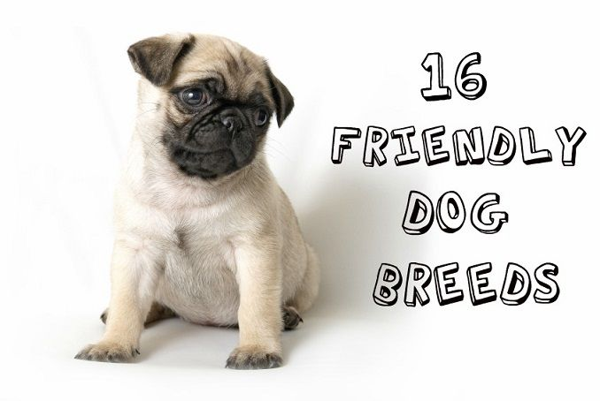 16 of the friendliest dog breeds | Cute Stuff | Pinterest ...