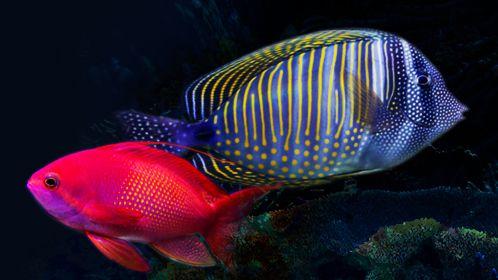 5 CONSEILS POUR L'ACHAT DE POISSONS D'AQUARIUM - Fluval - Découvrez des trucs et des conseils sur le montage d'un aquarium pour la maison.
