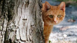 Alley Cat Allies