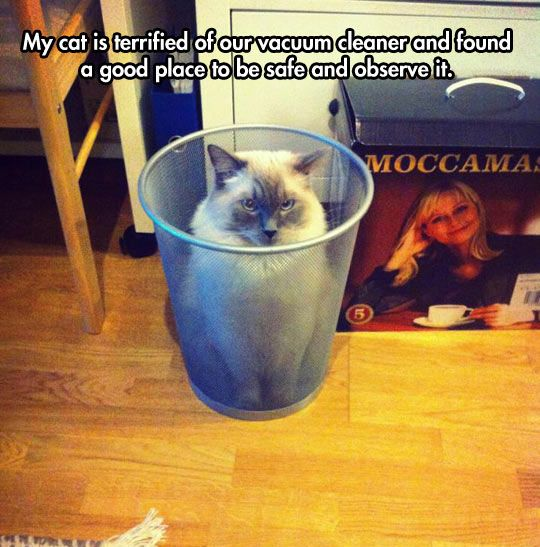 Images of the day -33 pics- My Cat Is Terrified Of Our Vacuum Cleaner And Found A Good Place To Be Safe And Observe It