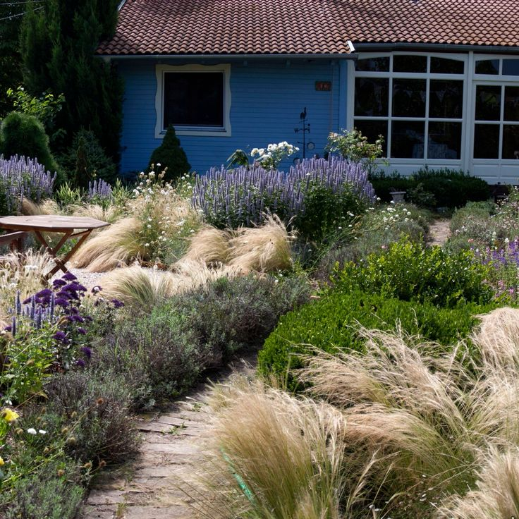Stipa with lavenders