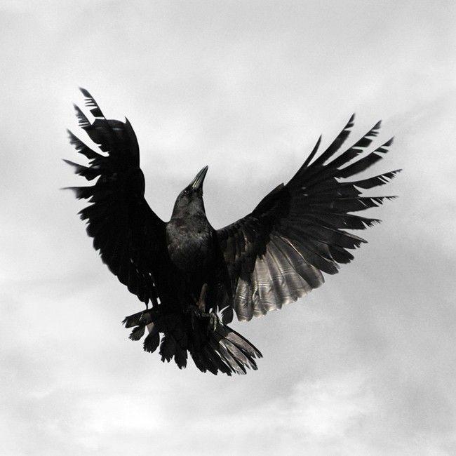 Crow,  Bird Art Print, 6 x 6. $25.00, via Etsy.