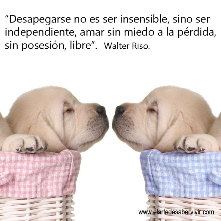 256 best images about frases de walter riso on pinterest for Frases de walter riso