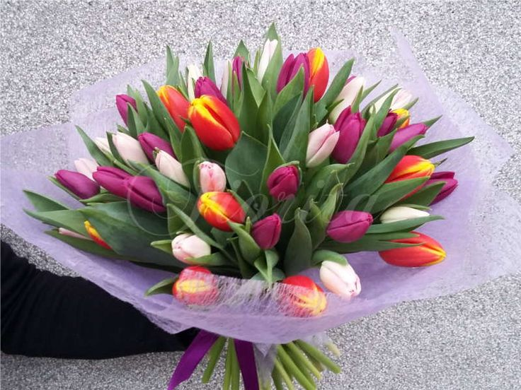 Kytice z 50 tulipánů