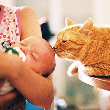Learn how to take the stress out of introducing your pet to your new baby. http://www.parents.com/baby/care/american-baby-how-tos/pet-meets-baby/?socsrc=pmmpin130329PetandBaby