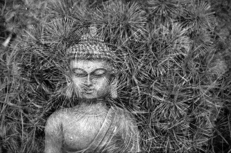 Mantra : Une petite définition du Mantra s'impose car on en entend quelques fois parler. On parle souvent de mantra Tibétain ou mantra Bouddhiste mais