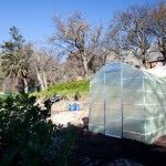 The new Urban Freedom Greenhouse with Table Mountain providing a magnificent background.  Cape Town, South Africa. http://urbanfreedom.co.za/2013/08/ozcf-installation-greenhouse-envy/