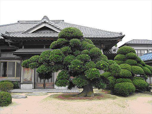 Macro Bonsai / NIPPON / Garden