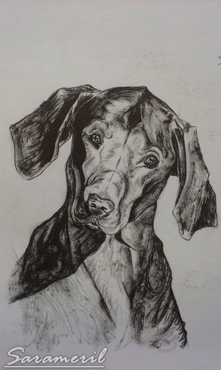 Dog portrait with ink