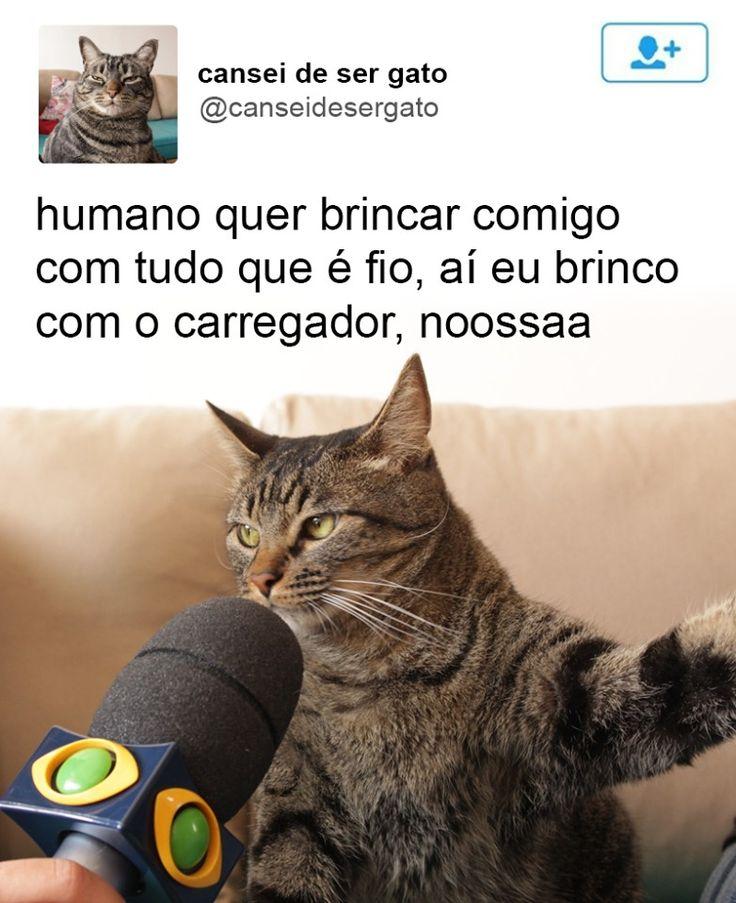 Se você acessou o Facebook ou o Twitter nos últimos dias, com certeza viu a foto desse gato sendo entrevistado por um repórter da Band