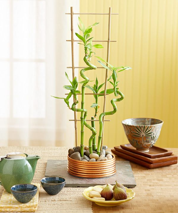 """Tabletop Bamboo Garden,Add a green touch with """"lucky bamboo"""" stems in a handcrafted container: Wrap 1/4-inch copper coil around a 6-inch galvanized end cap and waterproof the inside with silicone caulk. Set atop a 12-inch-square slate tile. The carefree plants thrive in bright light. Root in water and polished stones with a supporting bamboo trellis."""