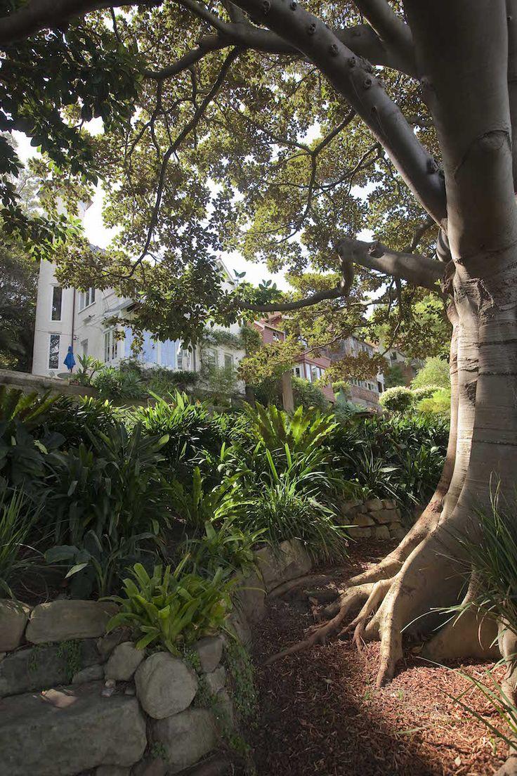 Wendy Whiteleys Secret Garden, Lavender Bay, Sydney. Image by Brent Wilson.