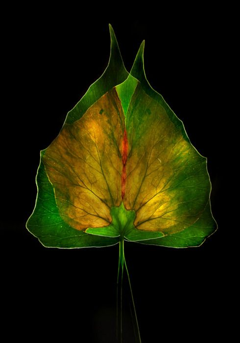Luigi Benedetti: Picture, Photos, Flowers Leaves Plants, Inspiration, Tree, Color, Luigi Benedetti, Benedetti Photography, Black