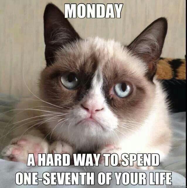 grumpy cat work humor work humor pinterest cats