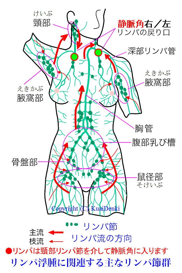 144 Best Images About Anatomy On Pinterest Muscle Cross