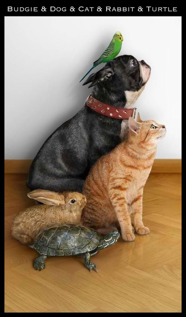 and a family can look like a lot of different things...   The 30 Most Inspiring Interspecies Friendships Of TheYear