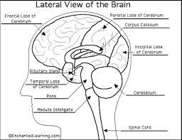 22 best forensic psychology courses sifs images on pinterest brain scan of criminal shows the what they think and what things force to commit in ccuart Gallery