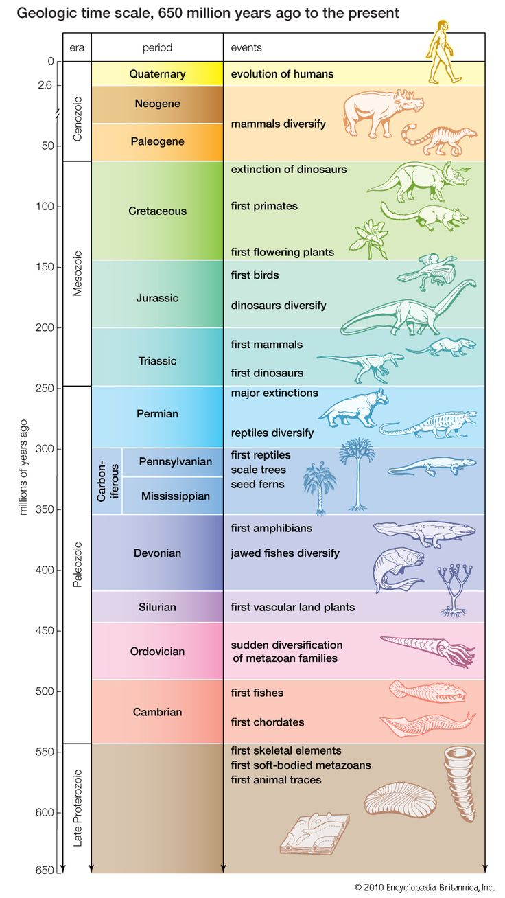 most important thing for a geologist: Geologic time scale