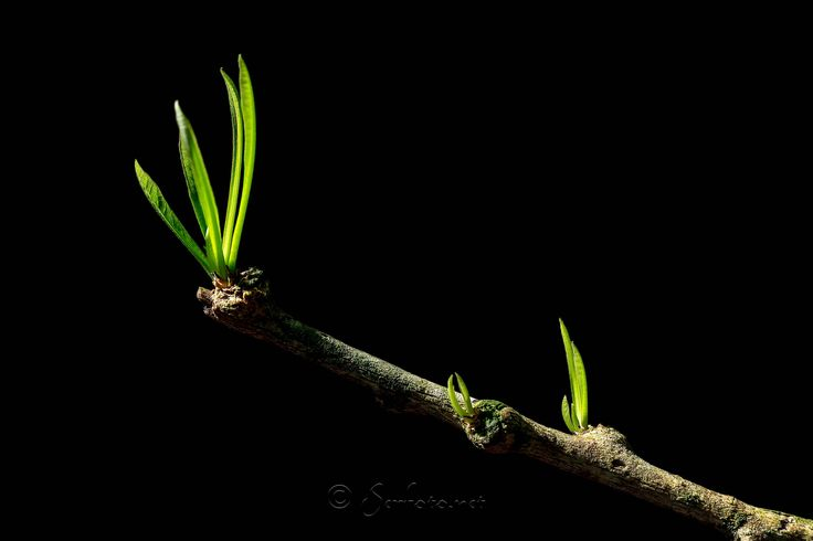 """https://flic.kr/p/J9Fntb   ¡Brotes Verdes!   © www.serfoto.net. All of the pictures are © copyright by Pablo Sandoval """"All rights are reserved"""" worldwide. Please do not use, copy or edit any of my photographs. However please feel free to contact with me if you are interested in using any of my images.aling Beauty"""