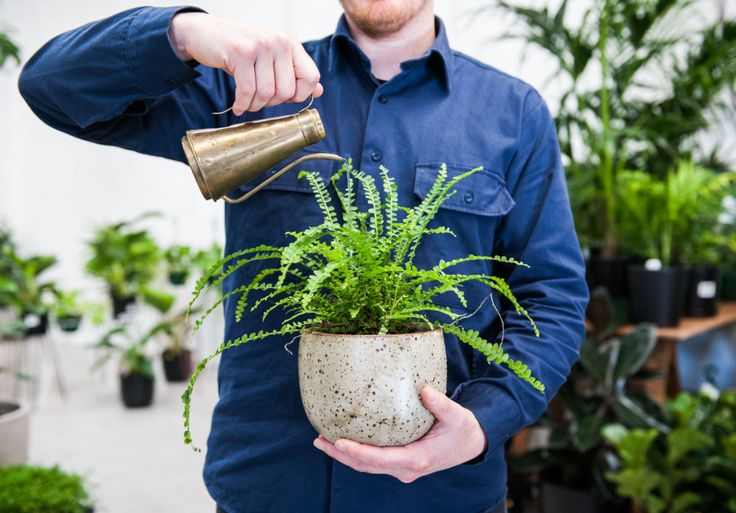 Where to buy cool indoor plants